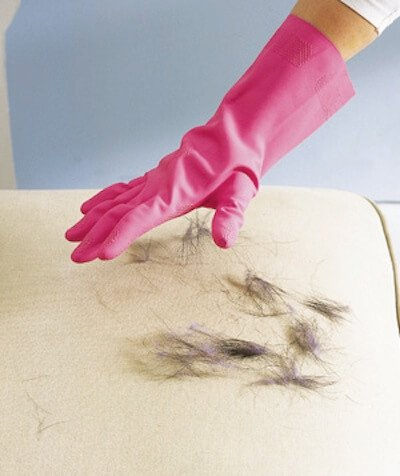 Woman Wearing Pink Gloves cleaning Pet Hair off a Couch